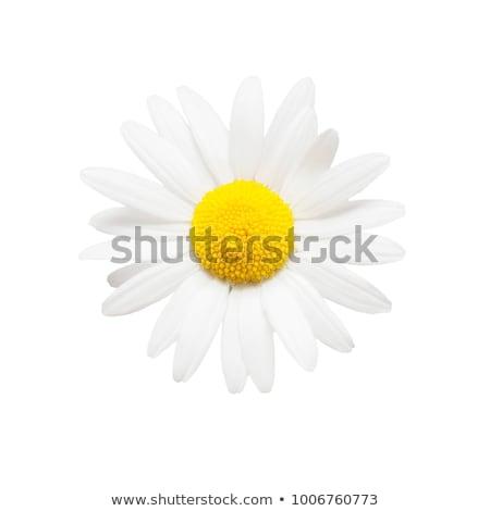 amarelo · flor · fronteira · natureza · luz - foto stock © adamson