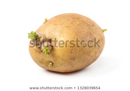 Sprouting potato isolated Stock photo © Givaga