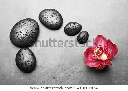 Su damlası zen taş çiçek yaprakları bambu Stok fotoğraf © calvste
