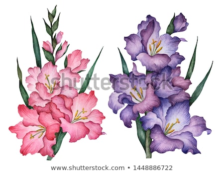 violet gladiolus flower Stock photo © prill