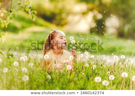 attractive blonde with a dandelions stock photo © acidgrey