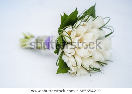 Wedding bouquet of white tulips in the bride Stock photo © tannjuska