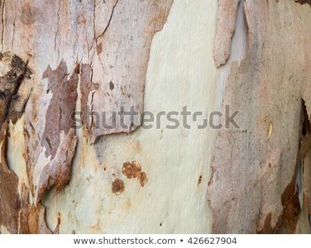 spotted gum tree trunk with bark stock photo © byjenjen
