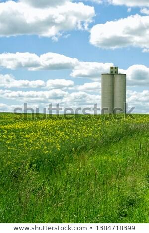 herbe · artificielle · feuille · texture · printemps · jardin · fond - photo stock © arcoss