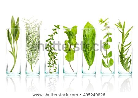 мудрец изолированный белый продовольствие фон зеленый Сток-фото © joannawnuk