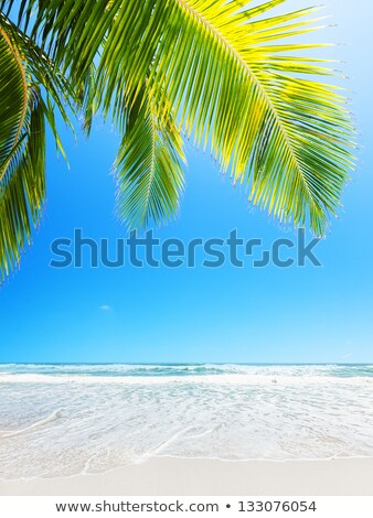 Perfect white sand beach. Vertical composition. Stock photo © moses