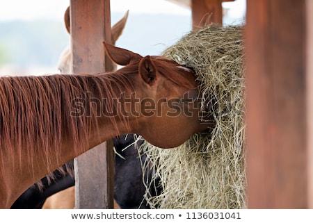 Brun cheval manger paille sweet printemps Photo stock © hraska