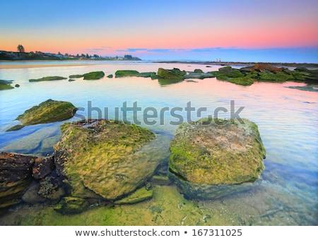naplemente · osztriga · Ausztrália · nyár · osztriga · farmok - stock fotó © lovleah