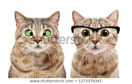 Veteriner sevimli kedi veteriner doktor Stok fotoğraf © stokkete