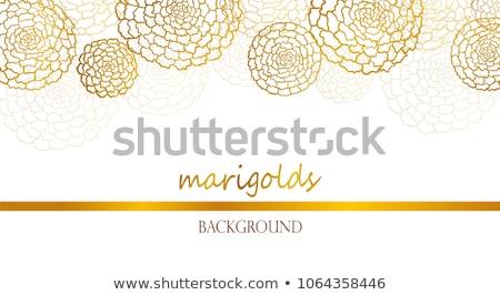Marigold background  Stock photo © meinzahn