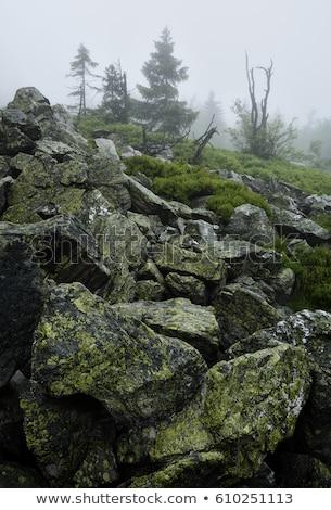 緑 · 林間の空き地 · 森林 · 雨 · ツリー · 葉 - ストックフォト © oleksandro