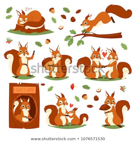 squirrel on park stock photo © antonio-s