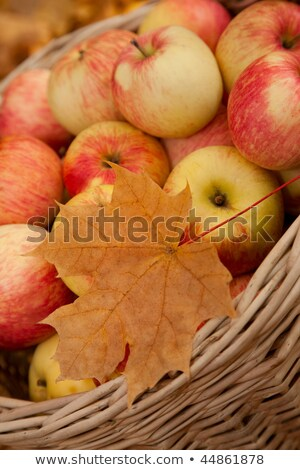 Wattled basket with apples among maple leaves Stock photo © Paha_L