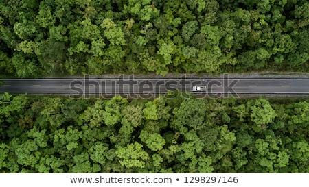 Kilátás vidéki út nyár nap fa út Stock fotó © neirfy