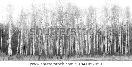black and white snowdrift Stock photo © romvo
