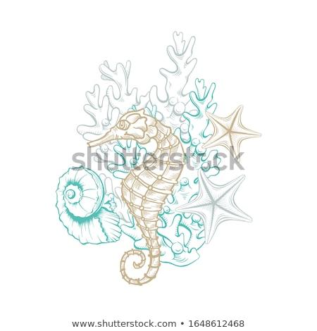 green seahorse line art illustration stock photo © cidepix