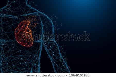 umani · cuore · medici · illustrazione · abstract · blu - foto d'archivio © tefi