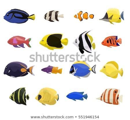 sok · tenger · teremtmények · illusztráció · háttér · cápa - stock fotó © bluering