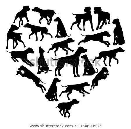 Dálmata cão coração silhueta similar alguém Foto stock © Krisdog