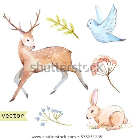 Set of vector watercolor deers and birds Stock photo © Artspace