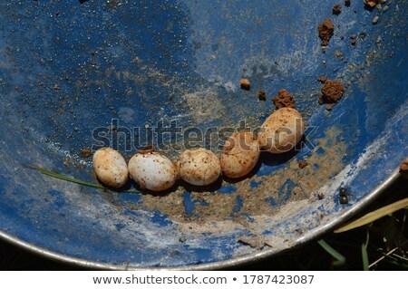 Zöld kígyó tojás tavacska illusztráció természet Stock fotó © colematt