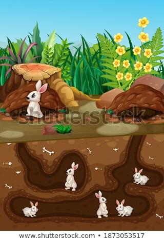 グループ ウサギ 生活 地下 実例 草 ストックフォト © colematt
