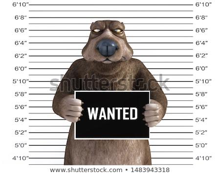 Cartoon colère voleur ours regarder animaux Photo stock © cthoman
