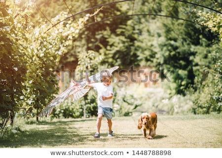mały · chłopca · psa · parku · drzewo - zdjęcia stock © galitskaya