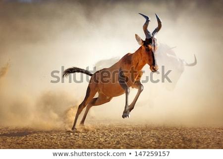 Rot Südafrika grünen Wüste Regen Stock foto © artush