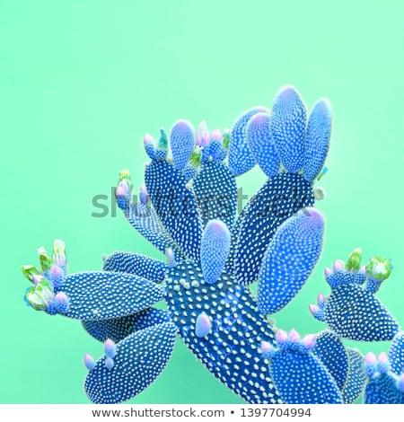 Cactus Fashion Design. Minimal Stillife. Trendy Bright Colors. Green Neon Mood on Pink background Stock photo © galitskaya