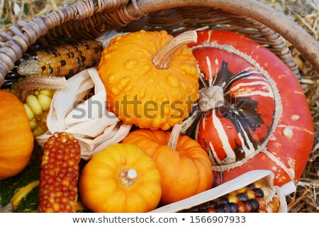 Gourds and Fiesta sweetcorn cobs with turban squash Stock photo © sarahdoow