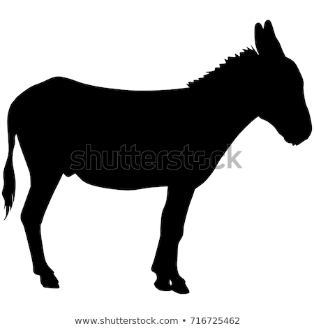 Donkey silhouette isolated vector illustration design Stock photo © Zhukow