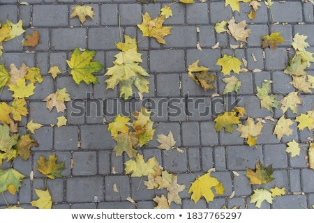 green maple leaves on a concrete slab Stock photo © vlaru
