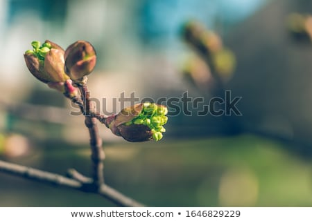 colorful new spring leaves growing on a tree stock photo © latent