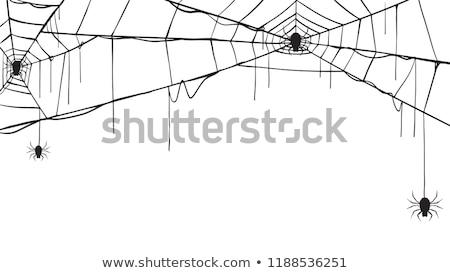 ibolya · pók · otthon · kert · tavasz · szépség - stock fotó © sweetcrisis