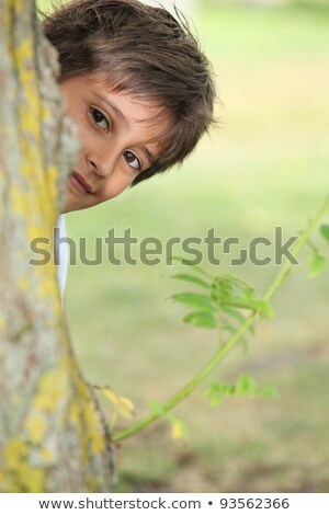 Young boy playing peek a boo around a tree Stock photo © photography33