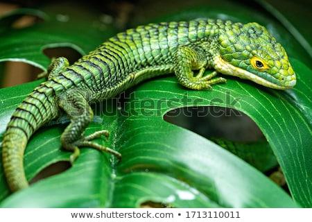 аллигатор ящерицы лес полу Сток-фото © Goldcoinz