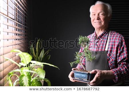 человека бонсай стороны знак связи черный Сток-фото © photography33
