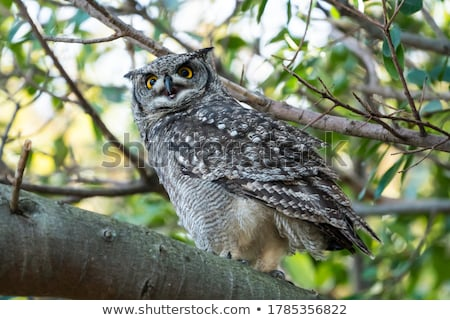 african eagle owl selective focus stock photo © michaklootwijk