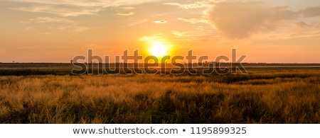 sunset in the steppe Stock photo © Andriy-Solovyov