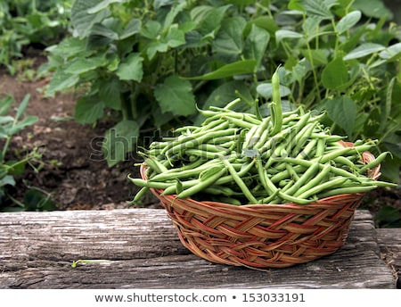 objets · haricots · verts · haricots · verts · organique · locale - photo stock © stockyimages