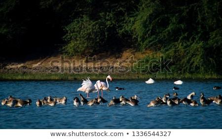 Kajakken man zee water afrika witte Stockfoto © dirkr