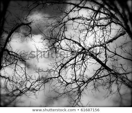 halloween · ruh · hali · fotoğraf · iki · erkek - stok fotoğraf © pxhidalgo