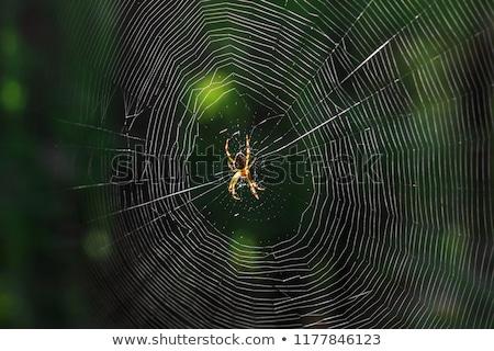 Insect gevangen spinnenweb groene natuurlijke textuur Stockfoto © pxhidalgo