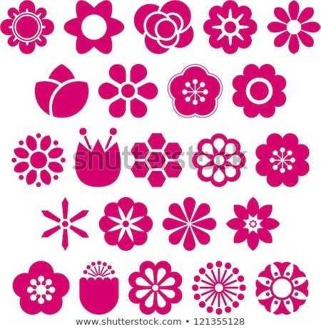 Flor-de-rosa ícone ilustração isolado branco flor Foto stock © cidepix