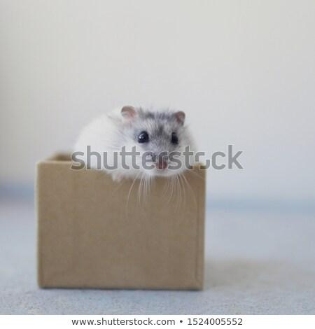 Kaméleon doboz menekülés kartondoboz fehér otthon Stock fotó © cosma