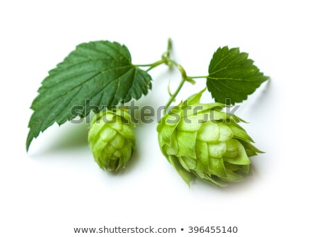 Mug of lager beer and green hops Stock photo © orensila