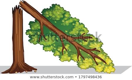 Zdjęcia stock: Podziale · drzewo · lasu · duży · burzy · trawy