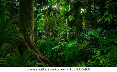 Rainforest ada Seyşeller bahar orman doğa Stok fotoğraf © kubais