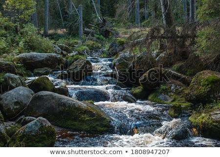 pequeno · cachoeira · musgo · rochas · longo · tempo - foto stock © avlntn